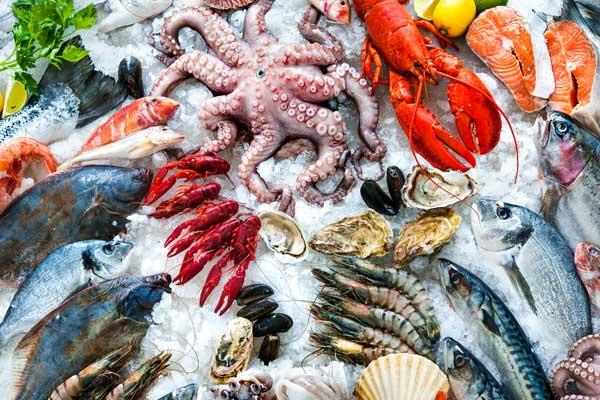 Australian Refrigeration Services fishing